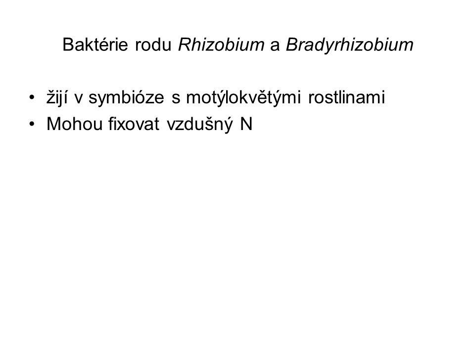 Baktérie rodu Rhizobium a Bradyrhizobium žijí v symbióze s motýlokvětými rostlinami Mohou fixovat vzdušný N