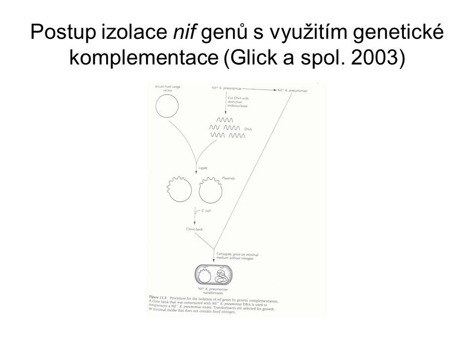 Postup izolace nif genů s využitím genetické komplementace (Glick a spol. 2003)