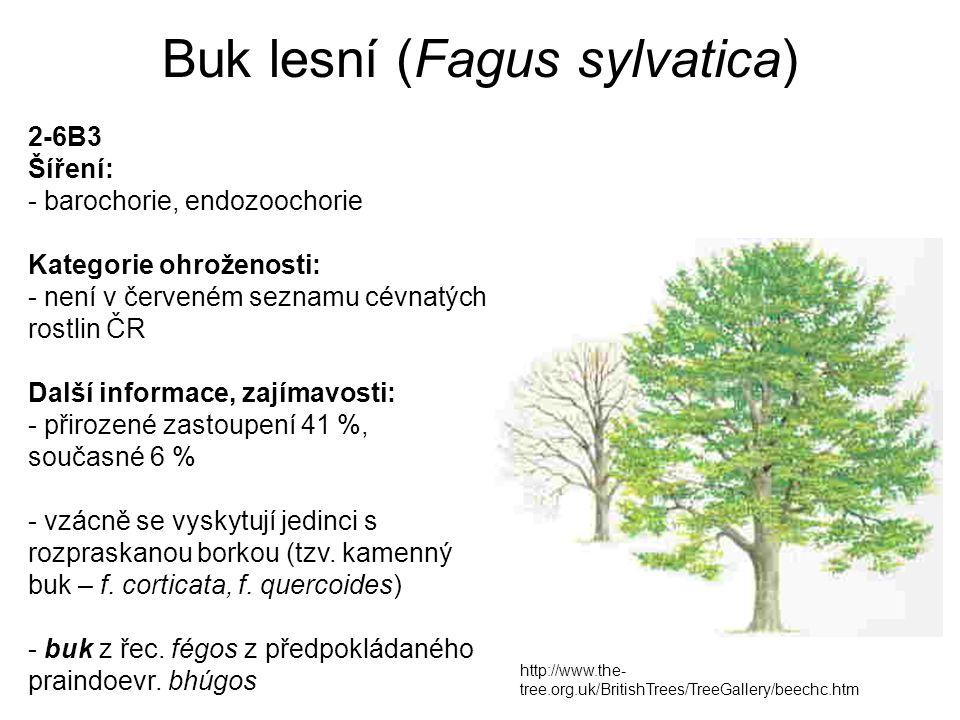 Buk lesní (Fagus sylvatica) http://www.the- tree.org.uk/BritishTrees/TreeGallery/beechc.htm 2-6B3 Šíření: - barochorie, endozoochorie Kategorie ohrože