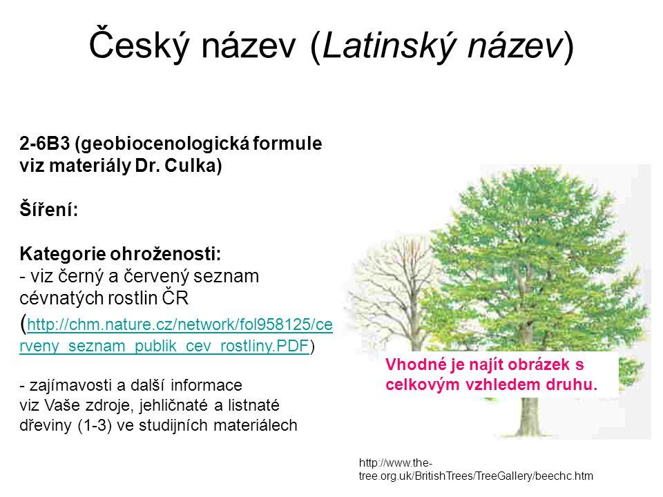 Český název (Latinský název) http://www.the- tree.org.uk/BritishTrees/TreeGallery/beechc.htm 2-6B3 (geobiocenologická formule viz materiály Dr. Culka)