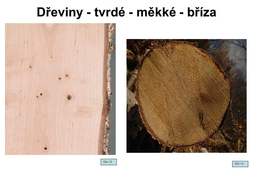 Dřeviny - tvrdé - měkké - bříza Obr.13 Obr.14