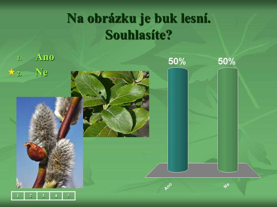 Na obrázku je buk lesní. Souhlasíte? 1. Ano 2. Ne 12345