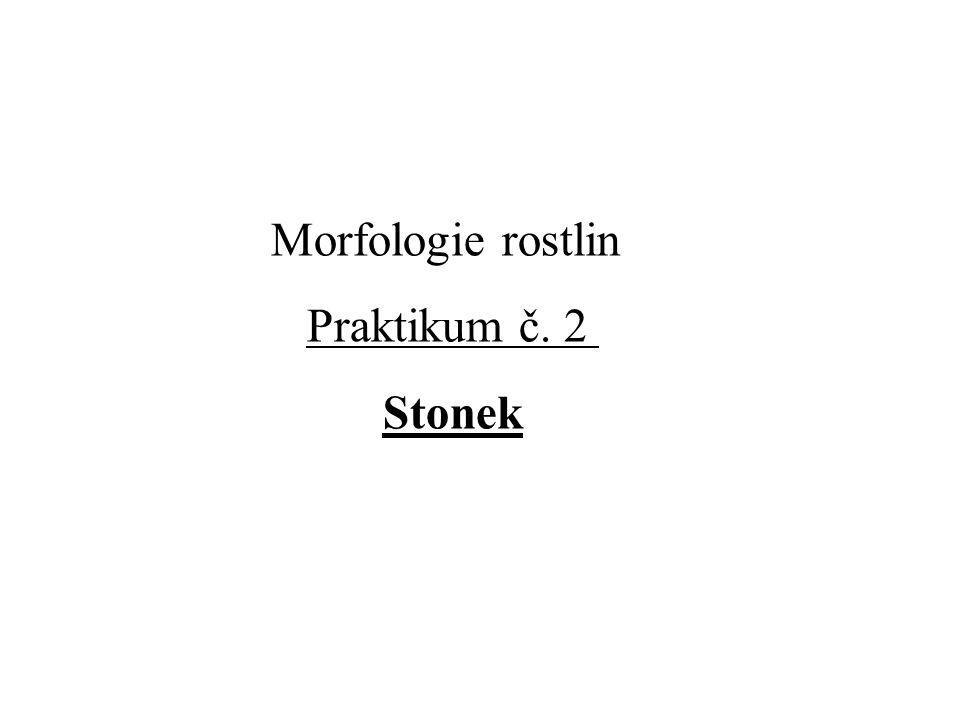 Prýt stonek + listy + generativní orgány (frons; shoot; Sproß)