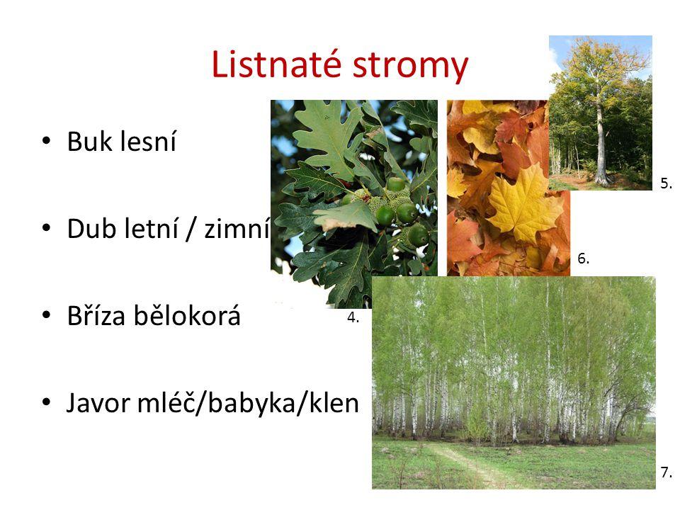 Listnaté stromy Buk lesní Dub letní / zimní Bříza bělokorá Javor mléč/babyka/klen 5. 6. 7. 4.