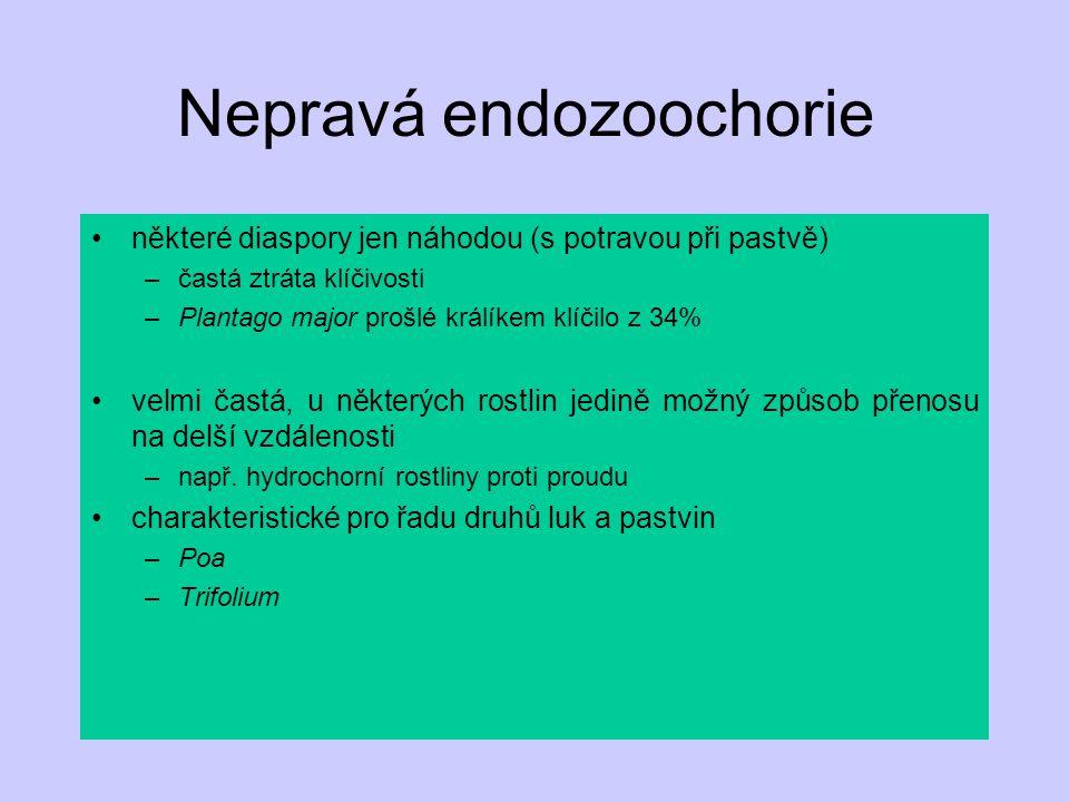 Nepravá endozoochorie některé diaspory jen náhodou (s potravou při pastvě) –častá ztráta klíčivosti –Plantago major prošlé králíkem klíčilo z 34% velm
