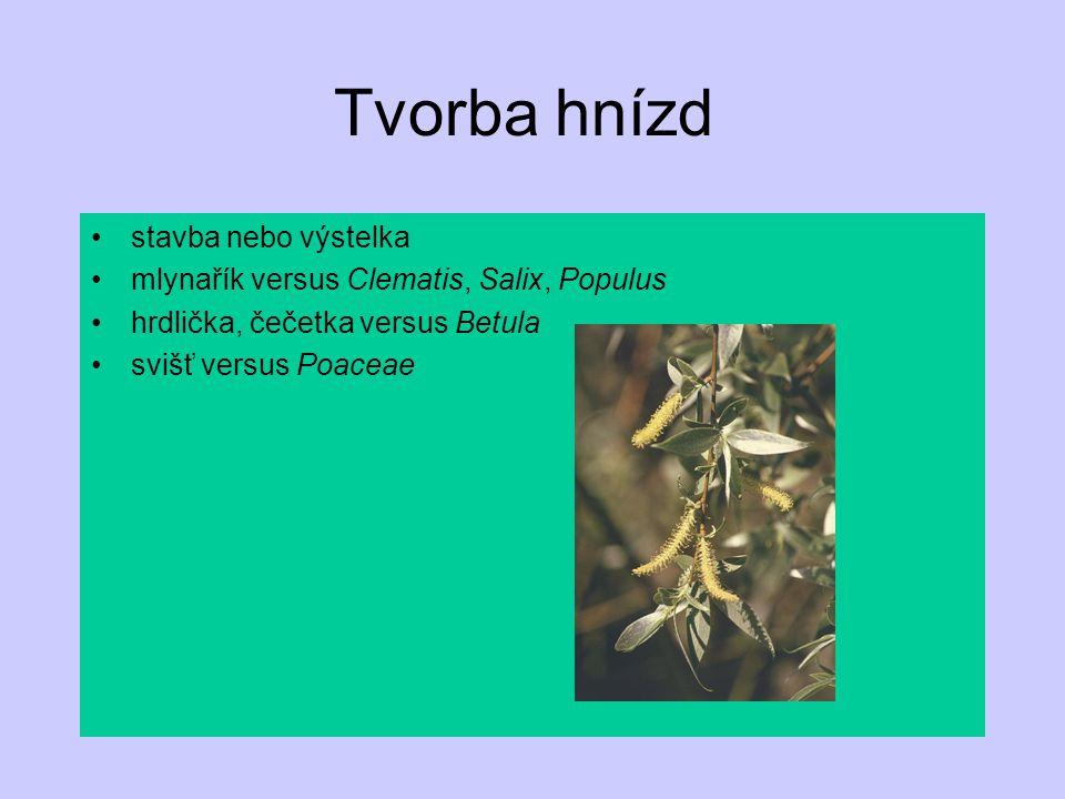 Tvorba hnízd stavba nebo výstelka mlynařík versus Clematis, Salix, Populus hrdlička, čečetka versus Betula svišť versus Poaceae