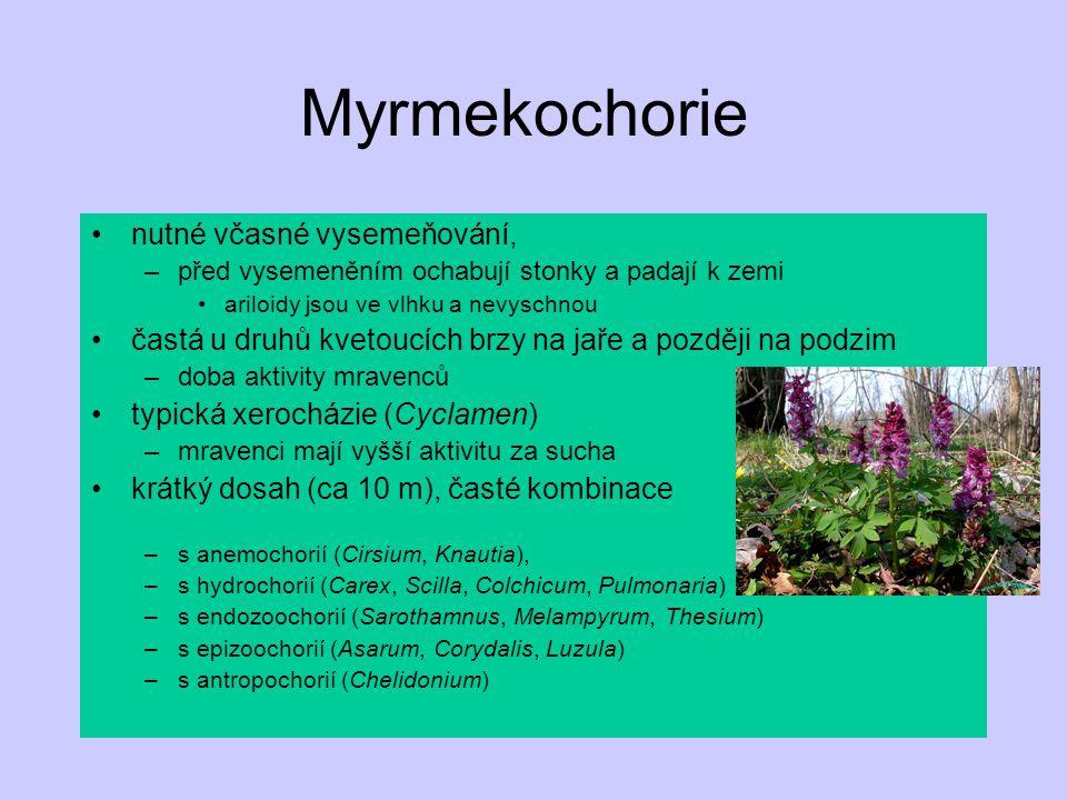 Myrmekochorie nutné včasné vysemeňování, –před vysemeněním ochabují stonky a padají k zemi ariloidy jsou ve vlhku a nevyschnou častá u druhů kvetoucíc