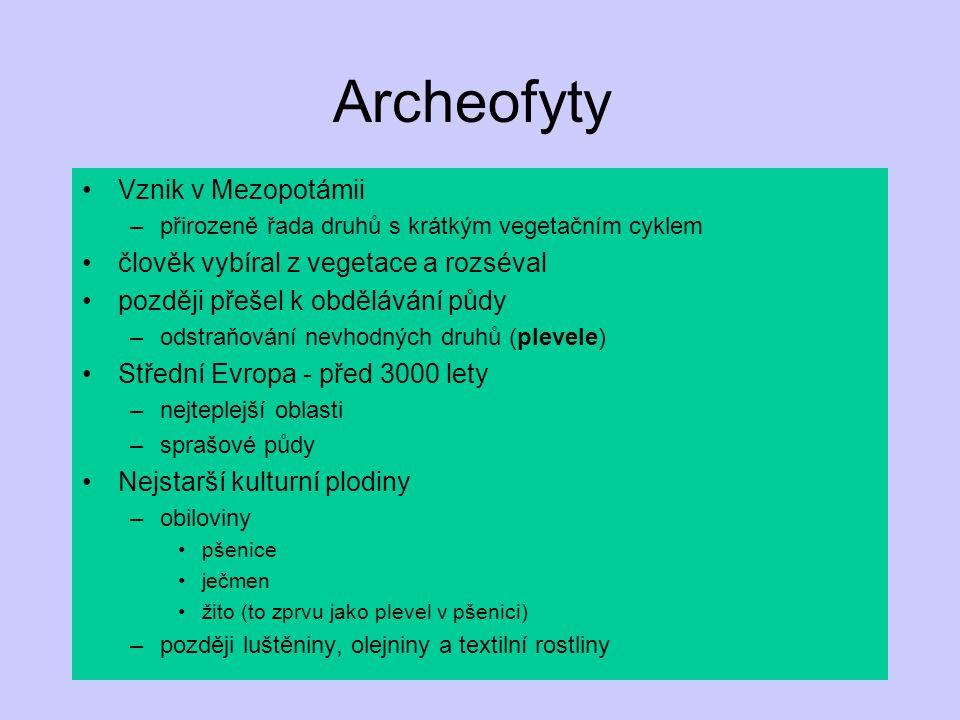 Archeofyty Vznik v Mezopotámii –přirozeně řada druhů s krátkým vegetačním cyklem člověk vybíral z vegetace a rozséval později přešel k obdělávání půdy –odstraňování nevhodných druhů (plevele) Střední Evropa - před 3000 lety –nejteplejší oblasti –sprašové půdy Nejstarší kulturní plodiny –obiloviny pšenice ječmen žito (to zprvu jako plevel v pšenici) –později luštěniny, olejniny a textilní rostliny