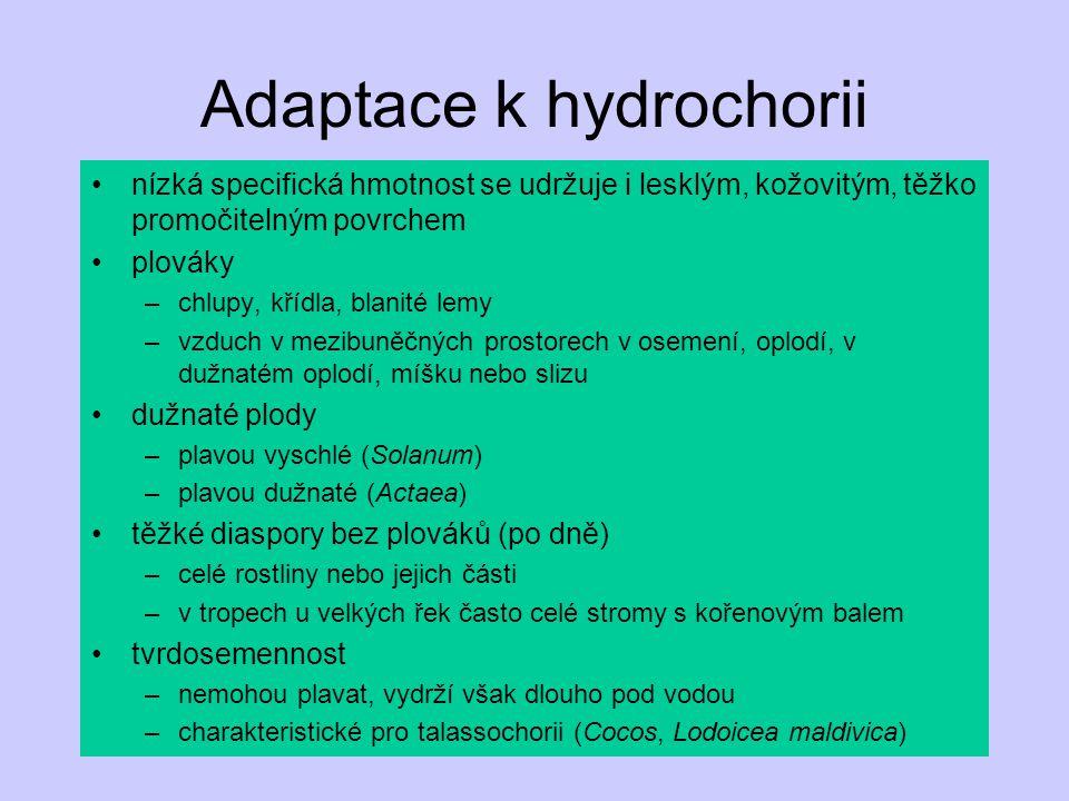 Adaptace k hydrochorii nízká specifická hmotnost se udržuje i lesklým, kožovitým, těžko promočitelným povrchem plováky –chlupy, křídla, blanité lemy –