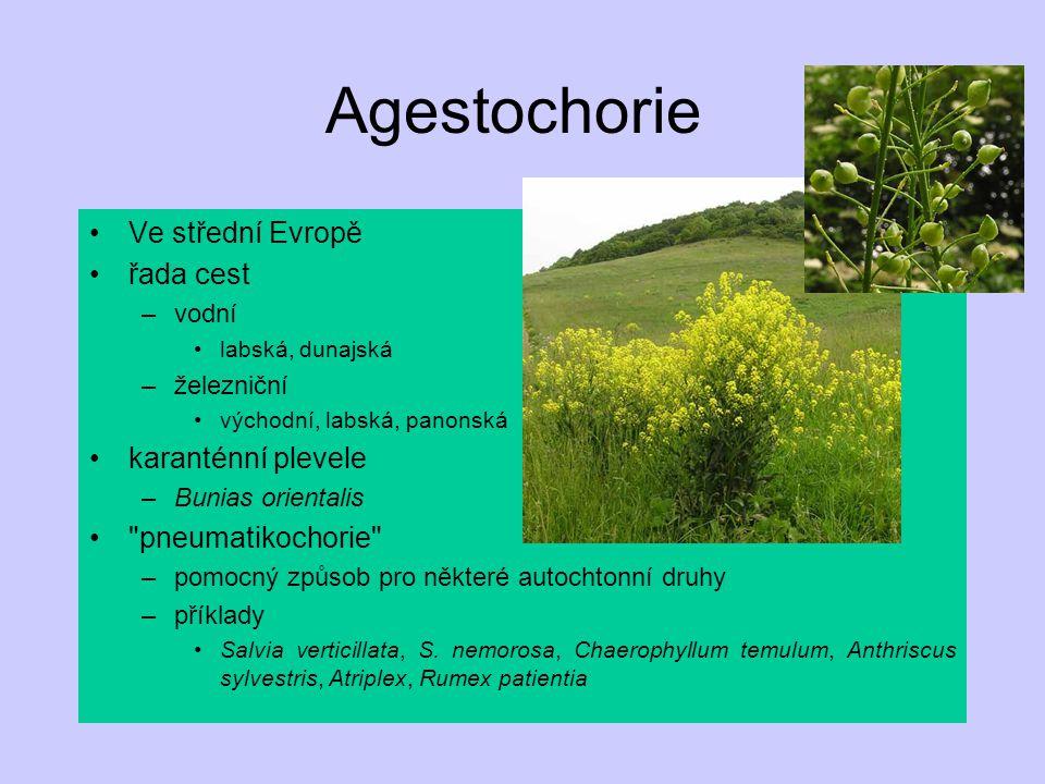 Agestochorie Ve střední Evropě řada cest –vodní labská, dunajská –železniční východní, labská, panonská karanténní plevele –Bunias orientalis