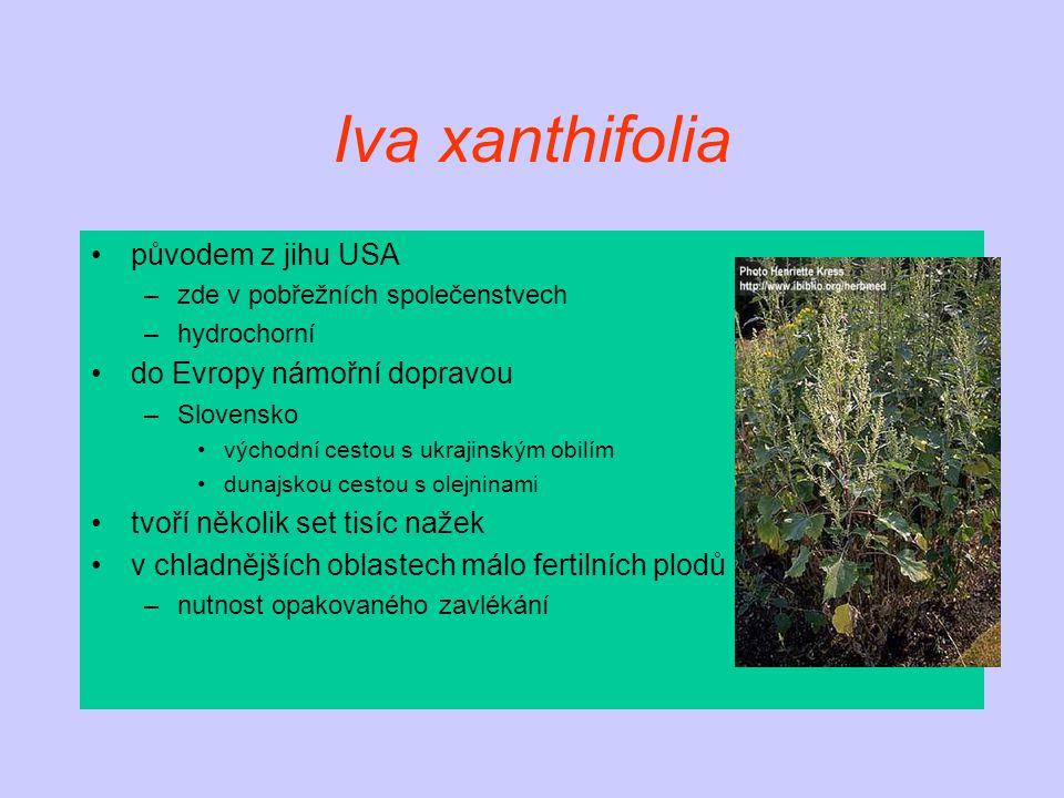 Iva xanthifolia původem z jihu USA –zde v pobřežních společenstvech –hydrochorní do Evropy námořní dopravou –Slovensko východní cestou s ukrajinským obilím dunajskou cestou s olejninami tvoří několik set tisíc nažek v chladnějších oblastech málo fertilních plodů –nutnost opakovaného zavlékání