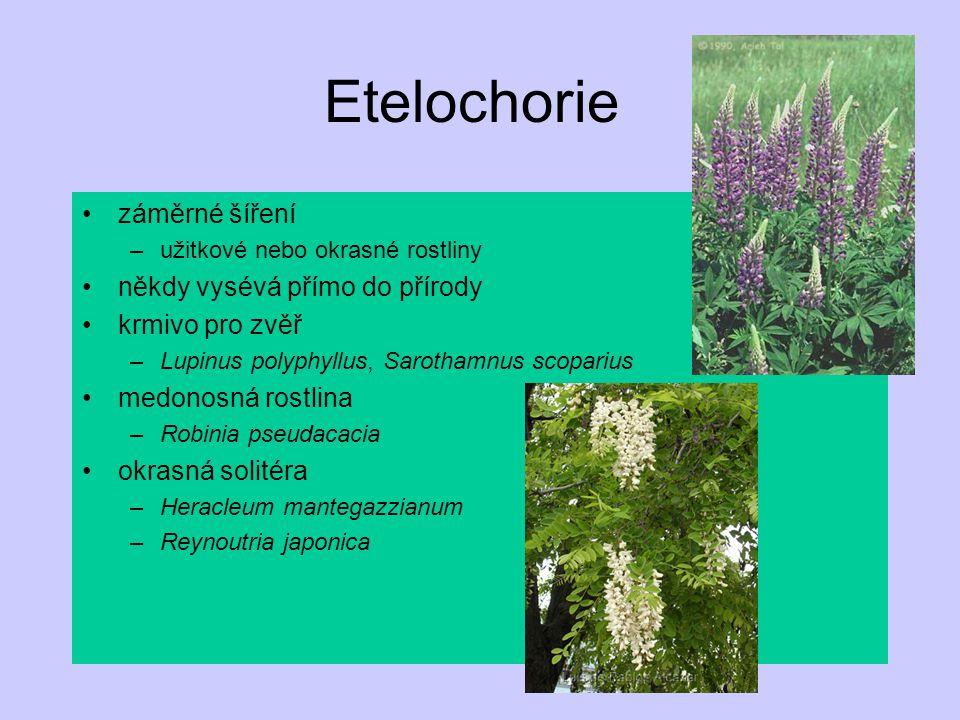 Etelochorie záměrné šíření –užitkové nebo okrasné rostliny někdy vysévá přímo do přírody krmivo pro zvěř –Lupinus polyphyllus, Sarothamnus scoparius medonosná rostlina –Robinia pseudacacia okrasná solitéra –Heracleum mantegazzianum –Reynoutria japonica