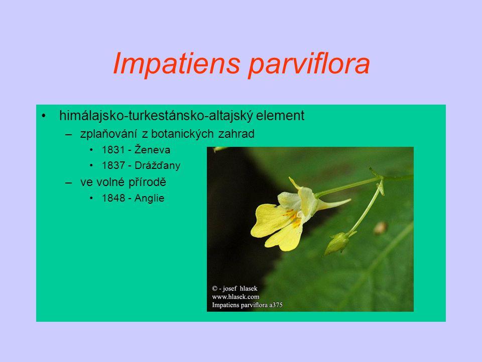 Impatiens parviflora himálajsko-turkestánsko-altajský element –zplaňování z botanických zahrad 1831 - Ženeva 1837 - Drážďany –ve volné přírodě 1848 - Anglie