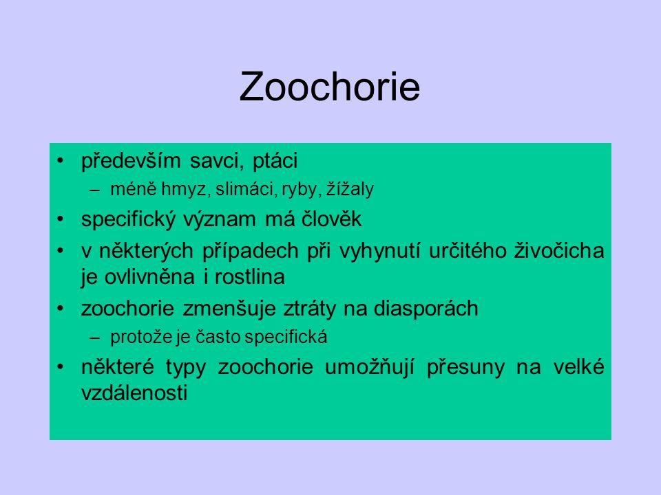 Zoochorie především savci, ptáci –méně hmyz, slimáci, ryby, žížaly specifický význam má člověk v některých případech při vyhynutí určitého živočicha j