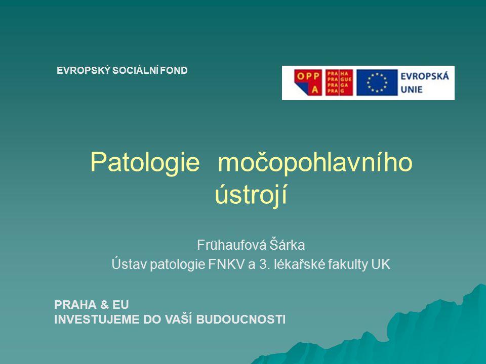 Patologie močopohlavního ústrojí Frühaufová Šárka Ústav patologie FNKV a 3.