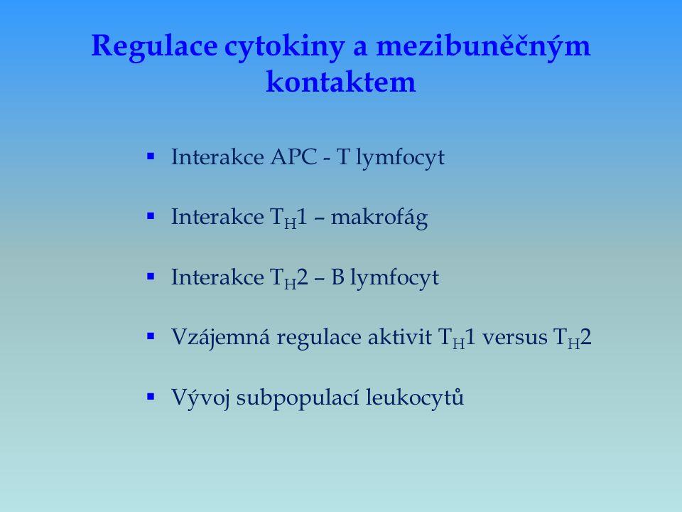 Regulace cytokiny a mezibuněčným kontaktem  Interakce APC - T lymfocyt  Interakce T H 1 – makrofág  Interakce T H 2 – B lymfocyt  Vzájemná regulac