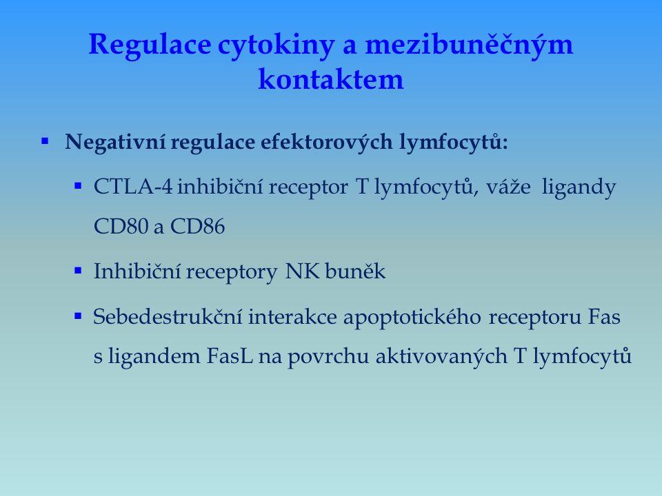  Negativní regulace efektorových lymfocytů:  CTLA-4 inhibiční receptor T lymfocytů, váže ligandy CD80 a CD86  Inhibiční receptory NK buněk  Sebede