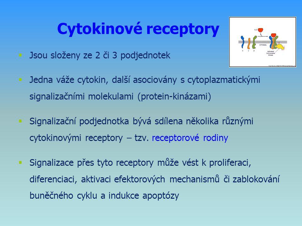 Cytokinové receptory  Jsou složeny ze 2 či 3 podjednotek  Jedna váže cytokin, další asociovány s cytoplazmatickými signalizačními molekulami (protei
