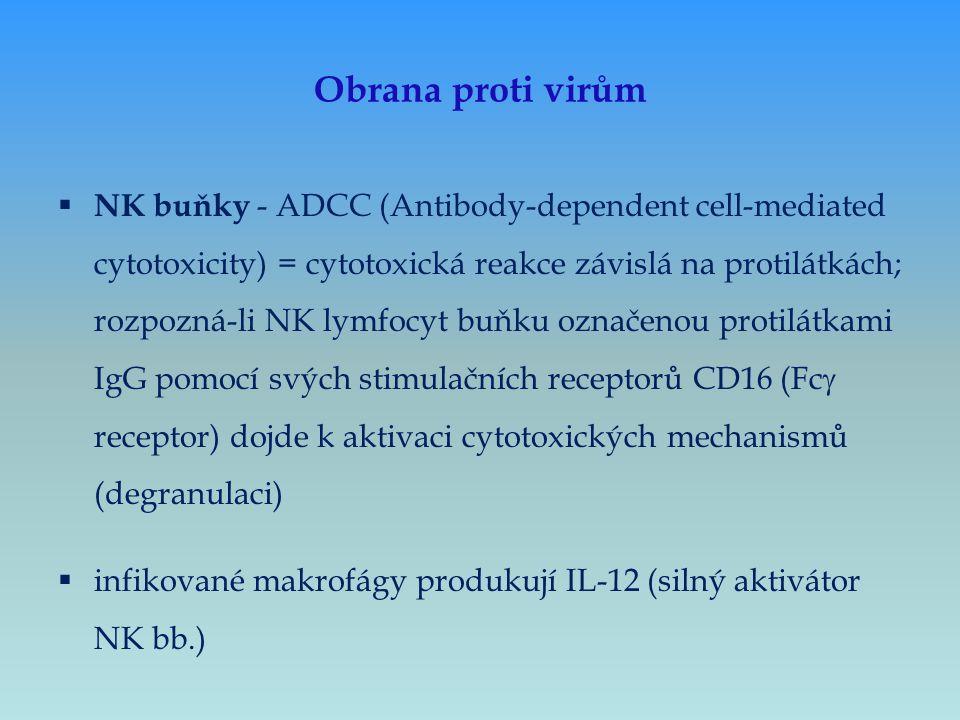 Obrana proti virům  NK buňky - ADCC (Antibody-dependent cell-mediated cytotoxicity) = cytotoxická reakce závislá na protilátkách; rozpozná-li NK lymf