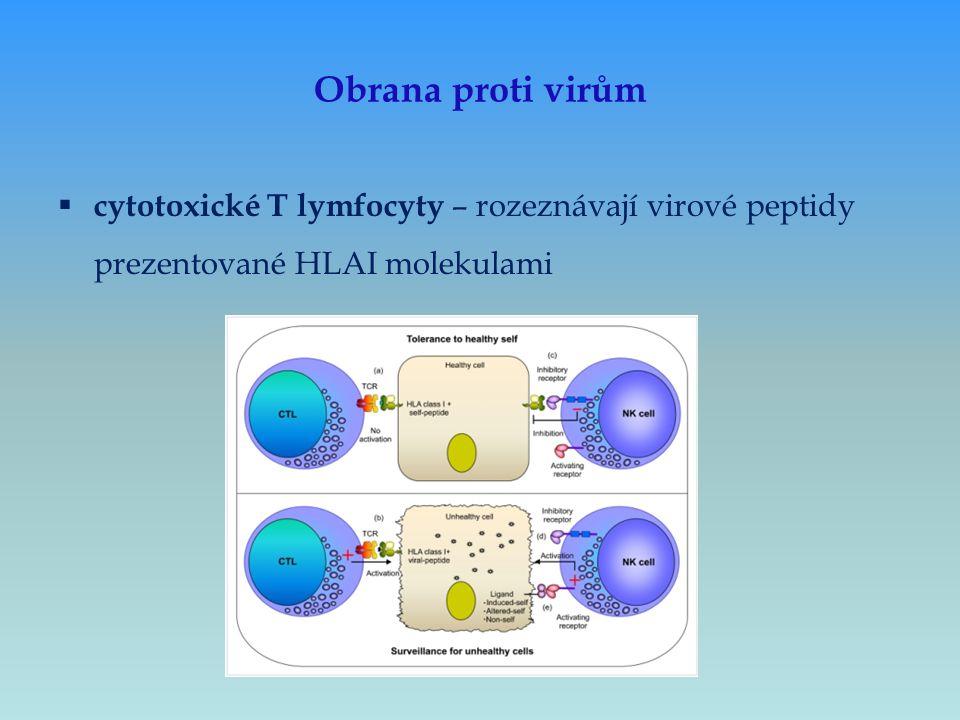 Obrana proti virům  cytotoxické T lymfocyty – rozeznávají virové peptidy prezentované HLAI molekulami