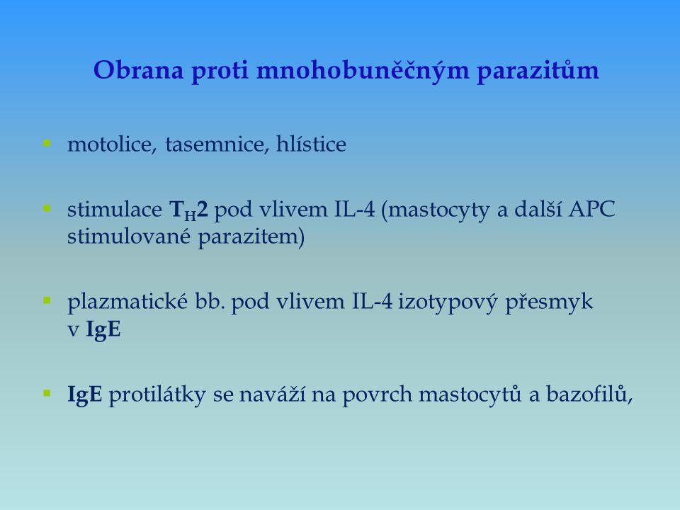  motolice, tasemnice, hlístice  stimulace T H 2 pod vlivem IL-4 (mastocyty a další APC stimulované parazitem)  plazmatické bb. pod vlivem IL-4 izot
