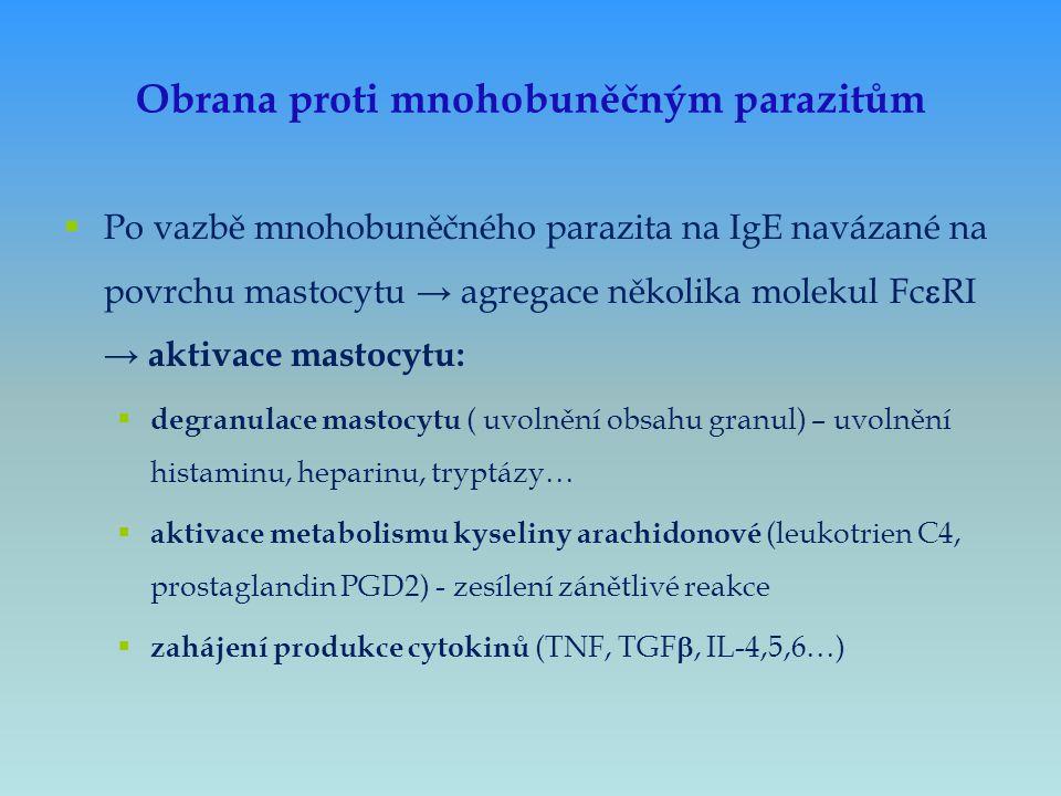 Obrana proti mnohobuněčným parazitům  Po vazbě mnohobuněčného parazita na IgE navázané na povrchu mastocytu → agregace několika molekul Fc  RI → akt