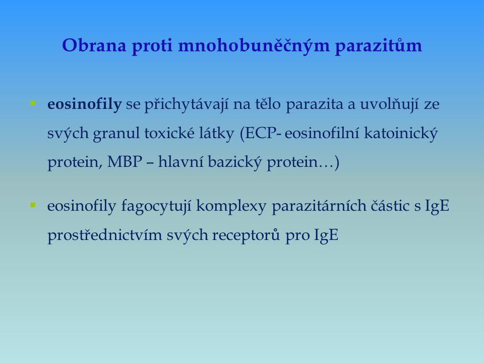 Obrana proti mnohobuněčným parazitům  eosinofily se přichytávají na tělo parazita a uvolňují ze svých granul toxické látky (ECP- eosinofilní katoinic