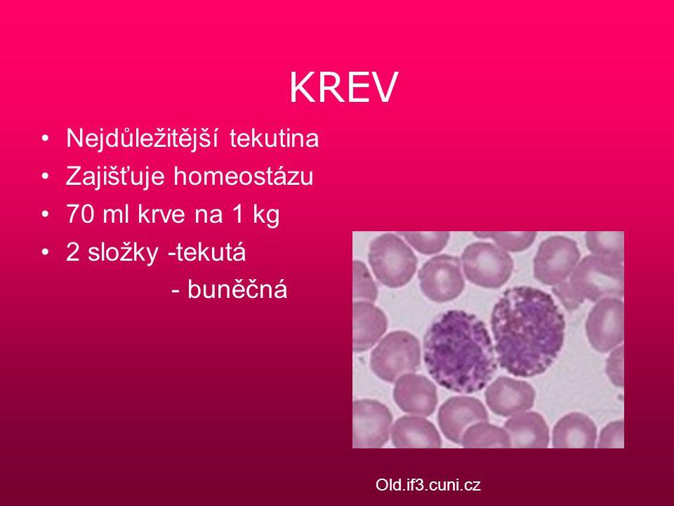KREV Nejdůležitější tekutina Zajišťuje homeostázu 70 ml krve na 1 kg 2 složky -tekutá - buněčná Old.if3.cuni.cz