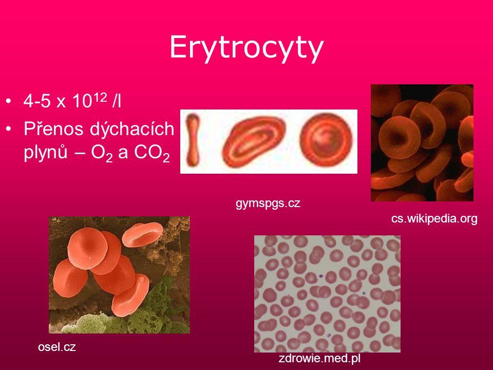 Leukocyty 4-10 x 10 9 /l Granulocyty- eosinofilní, neutrofilní,basofilní Mononukleáry – lymfocyty, monocyty Zajišťují obranyschopnost organismu members.home.nl cs.wikipedia.org