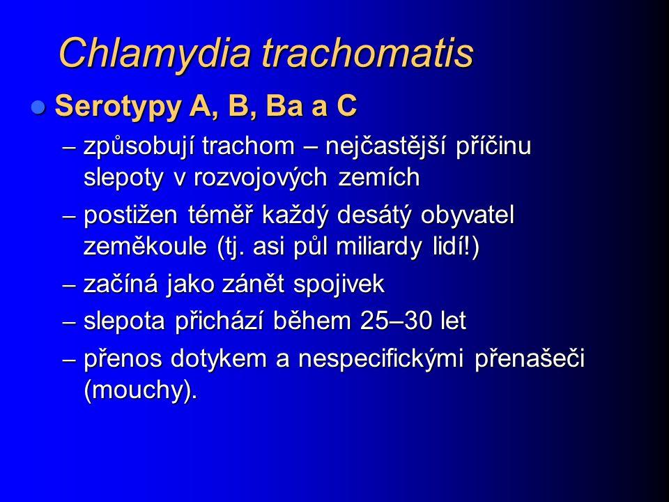 Chlamydia trachomatis Serotypy A, B, Ba a C Serotypy A, B, Ba a C – způsobují trachom – nejčastější příčinu slepoty v rozvojových zemích – postižen téměř každý desátý obyvatel zeměkoule (tj.