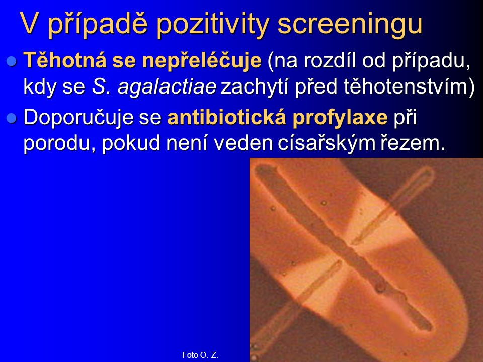 V případě pozitivity screeningu Těhotná se nepřeléčuje (na rozdíl od případu, kdy se S. agalactiae zachytí před těhotenstvím) Těhotná se nepřeléčuje (