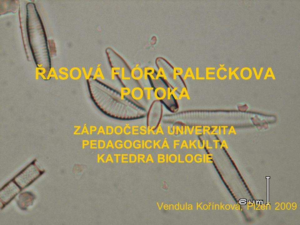 ŘASOVÁ FLÓRA PALEČKOVA POTOKA ZÁPADOČESKÁ UNIVERZITA PEDAGOGICKÁ FAKULTA KATEDRA BIOLOGIE Vendula Kořínková, Plzeň 2009
