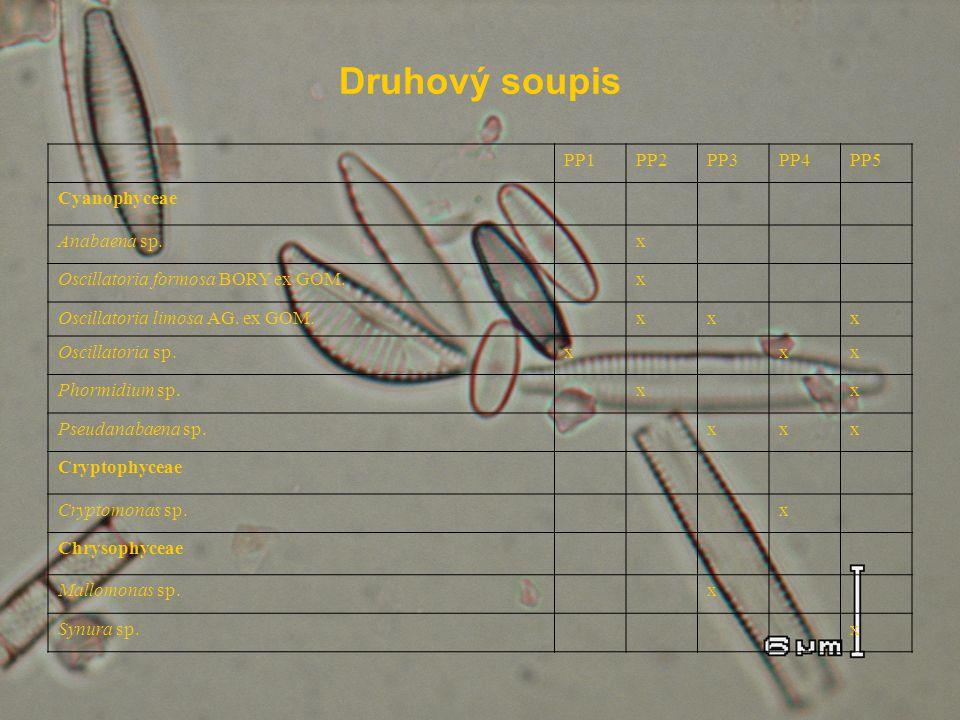 Druhový soupis PP1PP2PP3PP4PP5 Cyanophyceae Anabaena sp. x Oscillatoria formosa BORY ex GOM. x Oscillatoria limosa AG. ex GOM. xx x Oscillatoria sp.x