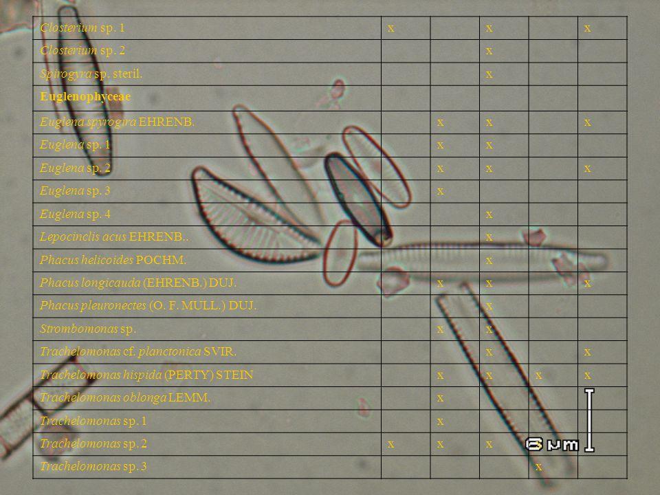 Closterium sp. 1x x x Closterium sp. 2 x Spirogyra sp. steril. x Euglenophyceae Euglena spyrogira EHRENB. xx x Euglena sp. 1 xx Euglena sp. 2 xx x Eug