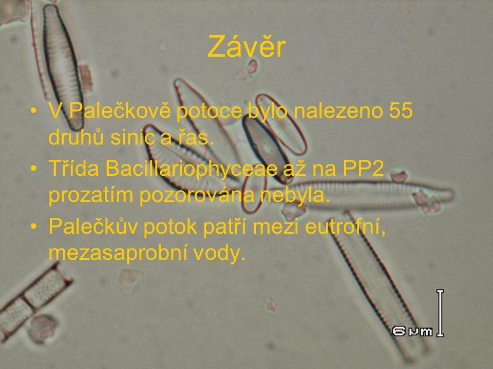 Závěr V Palečkově potoce bylo nalezeno 55 druhů sinic a řas. Třída Bacillariophyceae až na PP2 prozatím pozorována nebyla. Palečkův potok patří mezi e