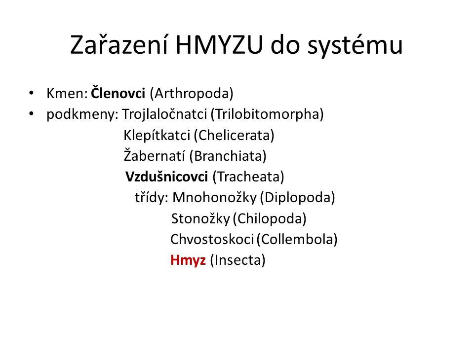 Zařazení HMYZU do systému Kmen: Členovci (Arthropoda) podkmeny: Trojlaločnatci (Trilobitomorpha) Klepítkatci (Chelicerata) Žabernatí (Branchiata) Vzdušnicovci (Tracheata) třídy: Mnohonožky (Diplopoda) Stonožky (Chilopoda) Chvostoskoci (Collembola) Hmyz (Insecta)