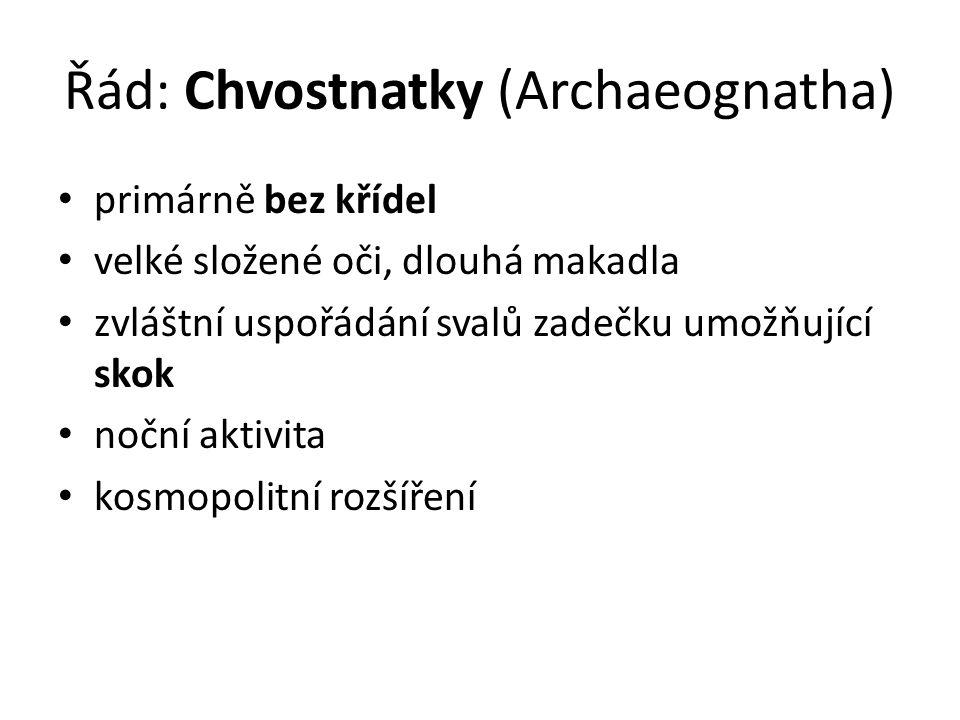 Řád: Chvostnatky (Archaeognatha) primárně bez křídel velké složené oči, dlouhá makadla zvláštní uspořádání svalů zadečku umožňující skok noční aktivita kosmopolitní rozšíření