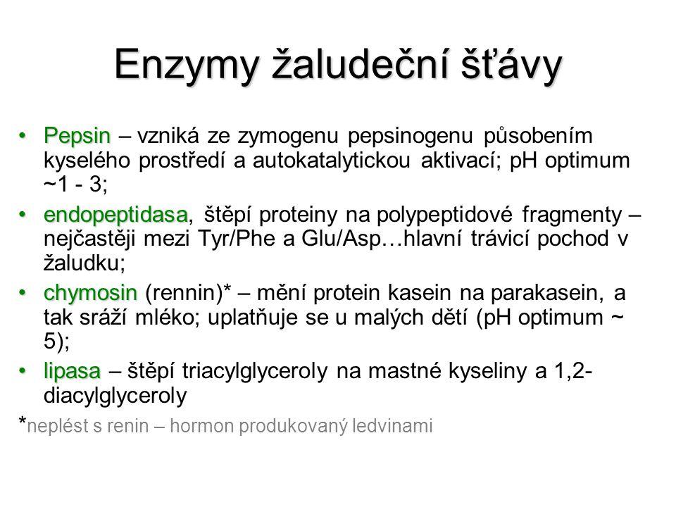 Enzymy žaludeční šťávy PepsinPepsin – vzniká ze zymogenu pepsinogenu působením kyselého prostředí a autokatalytickou aktivací; pH optimum ~1 - 3; endopeptidasaendopeptidasa, štěpí proteiny na polypeptidové fragmenty – nejčastěji mezi Tyr/Phe a Glu/Asp…hlavní trávicí pochod v žaludku; chymosinchymosin (rennin)* – mění protein kasein na parakasein, a tak sráží mléko; uplatňuje se u malých dětí (pH optimum ~ 5); lipasalipasa – štěpí triacylglyceroly na mastné kyseliny a 1,2- diacylglyceroly * neplést s renin – hormon produkovaný ledvinami