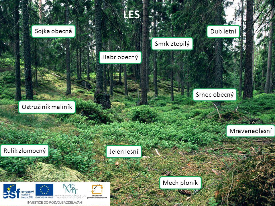 Použité zdroje: Natural monument Jilmova skala in summer 2011 (7).JPG.
