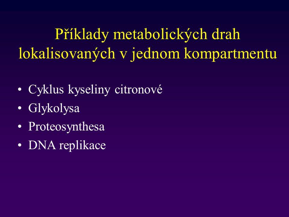 Příklady metabolických drah lokalisovaných v jednom kompartmentu Cyklus kyseliny citronové Glykolysa Proteosynthesa DNA replikace