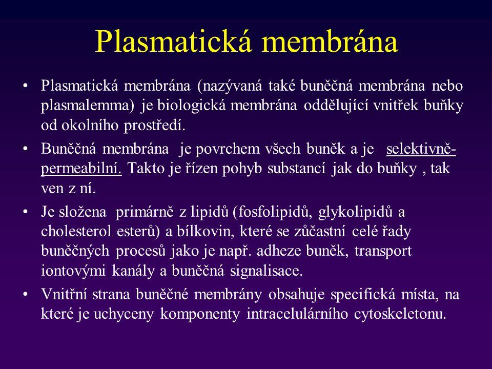 Lysosomy Zodpovídají za intracelulární digesce jak intracelulárních, tak extracelulárních látek Lysosomální enzymy jsou hydrolasy s maximální aktivitou při pH 5 (vnitřek lysosomů) Hydrolysa intracelulární materiál – proteiny, nukleové kyseliny, lipidy stejně jako organely – autofagie Extracelulární material je hydrolysován po transportu do buňky endocytosou (pinocytosa and phagocytosa) - heterofagie