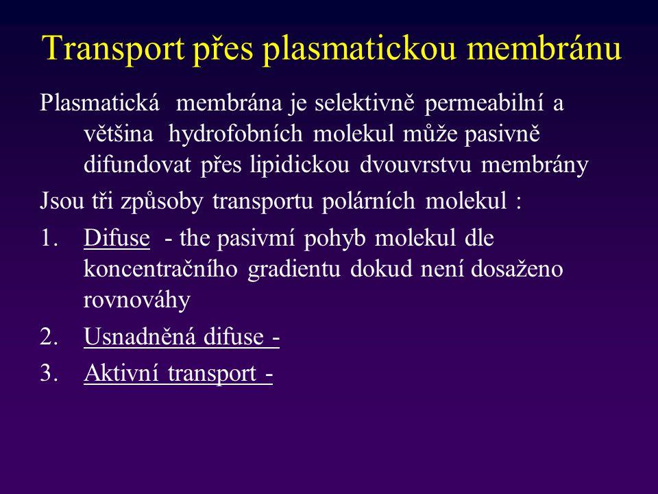 Transport přes plasmatickou membránu Plasmatická membrána je selektivně permeabilní a většina hydrofobních molekul může pasivně difundovat přes lipidi