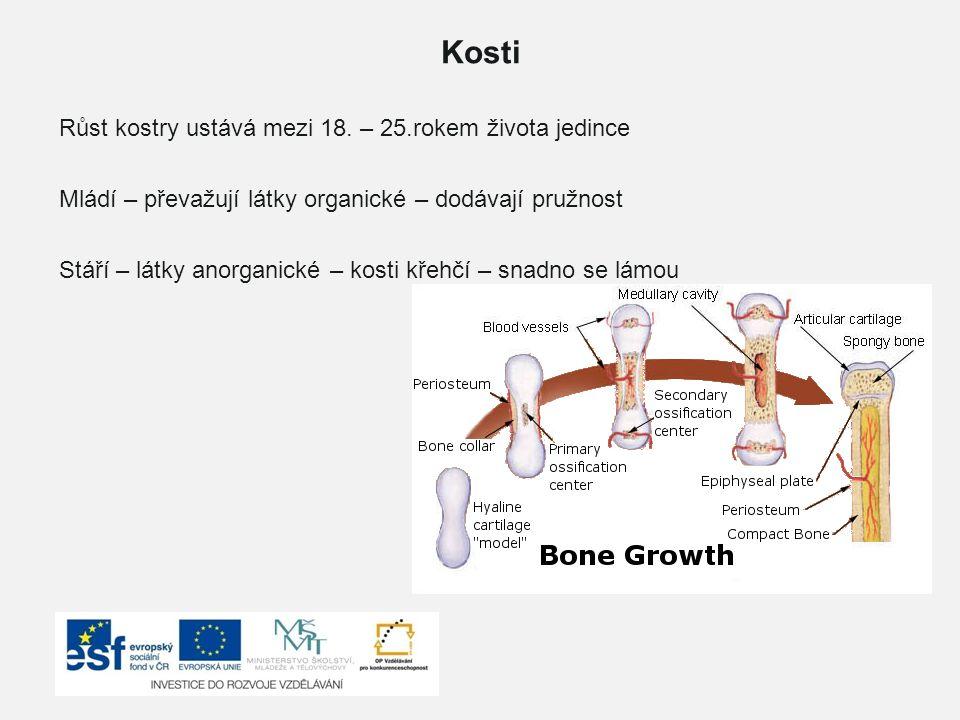 Kosti Růst kostry ustává mezi 18. – 25.rokem života jedince Mládí – převažují látky organické – dodávají pružnost Stáří – látky anorganické – kosti kř