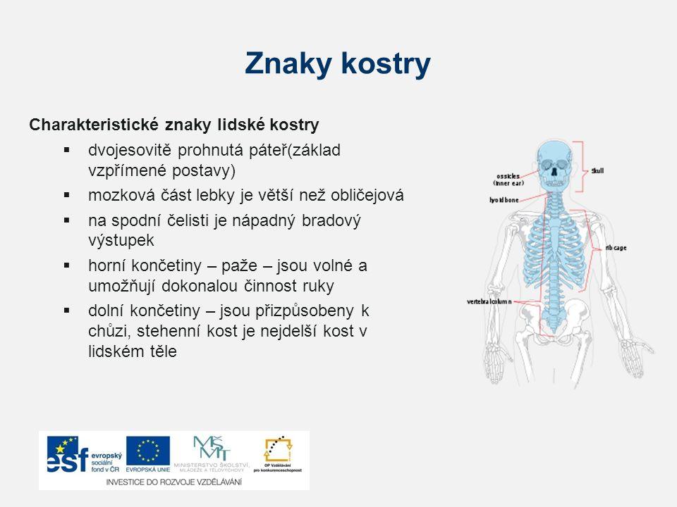 Znaky kostry Charakteristické znaky lidské kostry  dvojesovitě prohnutá páteř(základ vzpřímené postavy)  mozková část lebky je větší než obličejová