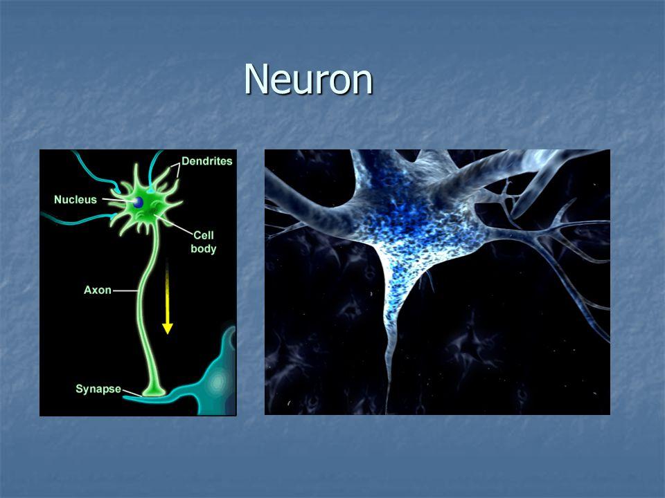 Synapse Synapse
