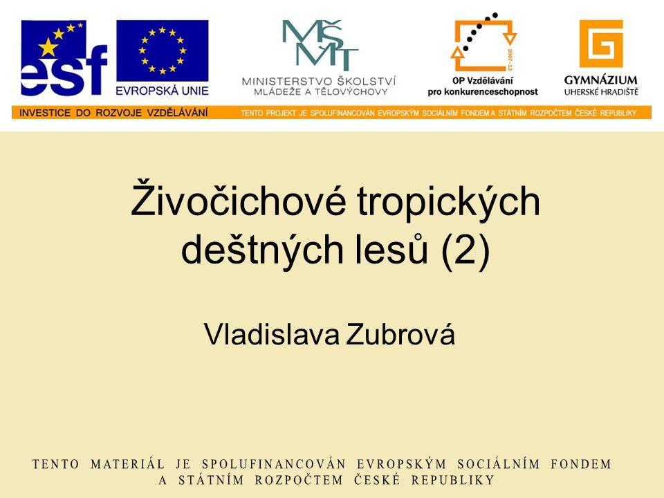 Živočichové tropických deštných lesů (2) Vladislava Zubrová