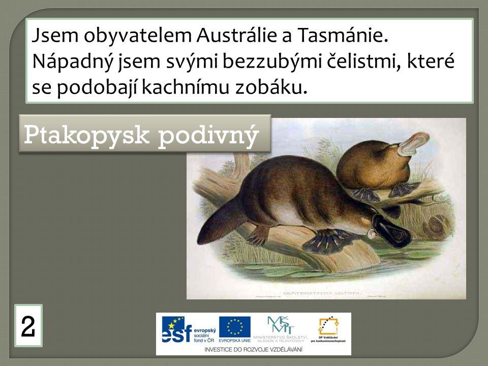Jsem obyvatelem Austrálie a Tasmánie. Nápadný jsem svými bezzubými čelistmi, které se podobají kachnímu zobáku. Ptakopysk podivný 2