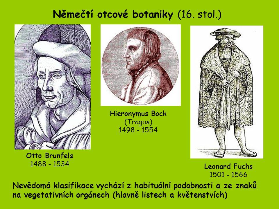 Herbáře jako sbírky sušených rostlin Za vynálezce herbarizace rostlin považován Luca Ghini, prefekt botanické zahrady v Pise.