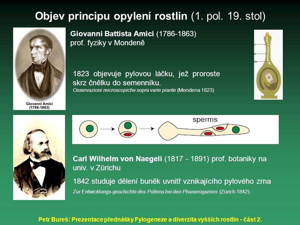 Petr Bureš: Prezentace přednášky Fylogeneze a diverzita vyšších rostlin - část 2. 1823 objevuje pylovou láčku, jež proroste skrz čnělku do semenníku.