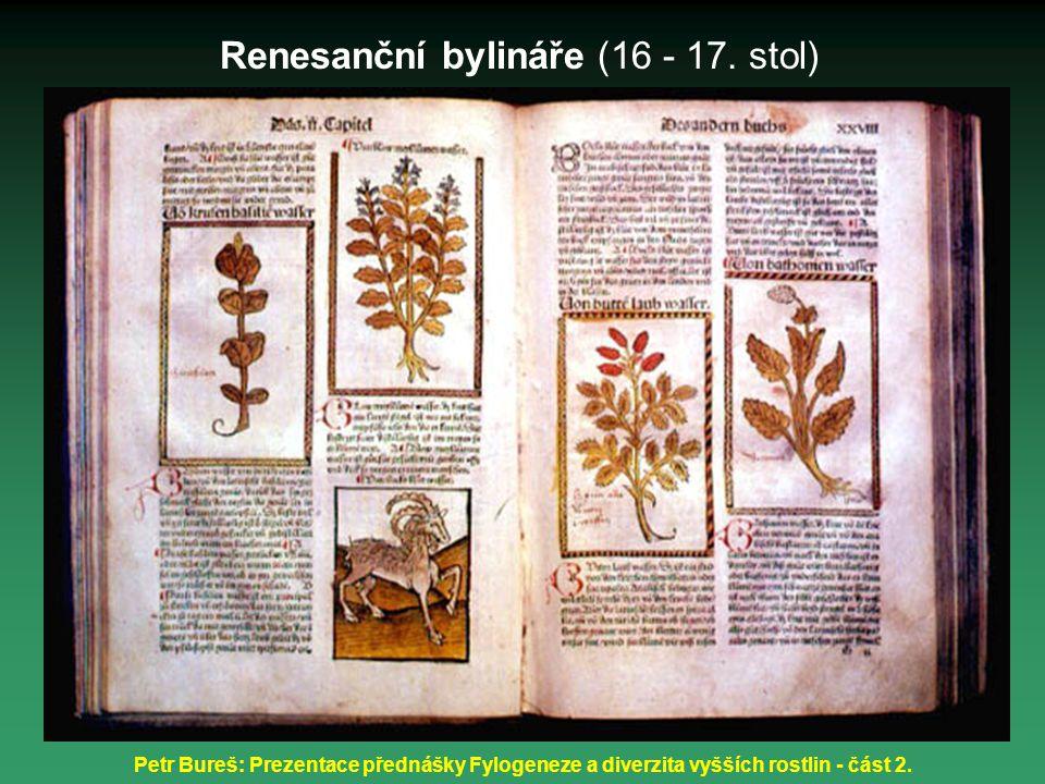 Petr Bureš: Prezentace přednášky Fylogeneze a diverzita vyšších rostlin - část 2. Renesanční bylináře (16 - 17. stol)